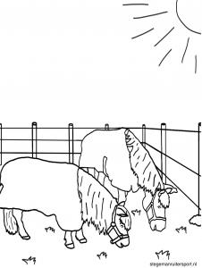 Paarden kleurplaat paarden in wei