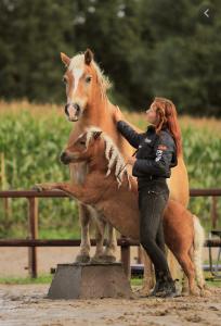 vrijheidsdressuur pony paard