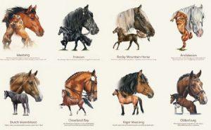 paardenrassen paard pony fries mustang