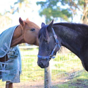 Overdreven zorg doet paarden meer kwaad dan goed